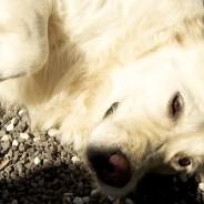 self dog