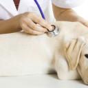 Corso primo soccorso sul cane
